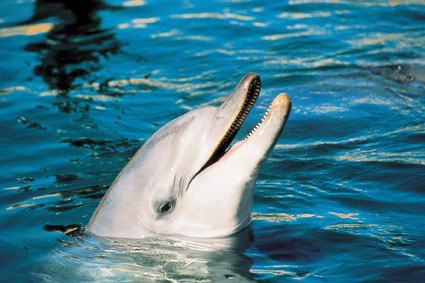 Dolphins,_Reefs_and_Parks_2_dolphin.jpg