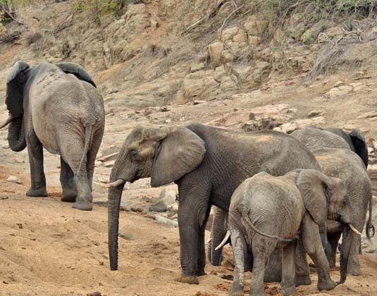 Hamiltons_Tented_Elephants.jpg
