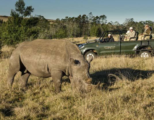 Gondwana_-_Rhino.jpg