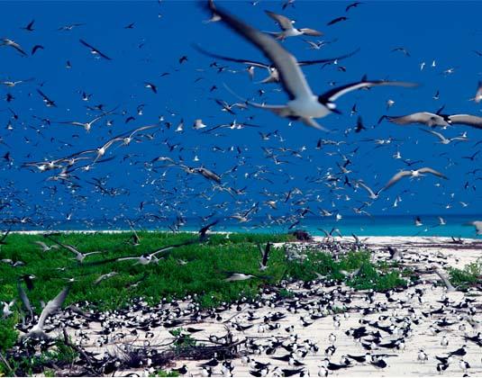 Bird Island - Birds