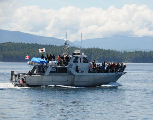 Johnstone Strait Whale Watching