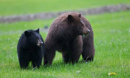 Whistler_bear_tour.jpg