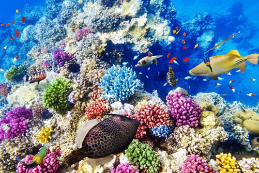 Great_Barrier_Reef_shutterstock_261953732.jpg