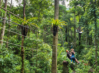 Jungle Surfing Canopy Tour excursion