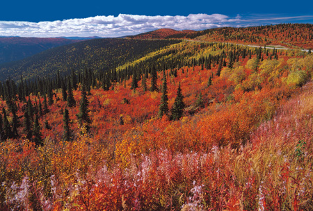 Top_of_the_world_Highway,_above_Dawson_City_shutterstock_86530132.jpg