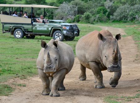 Shamwari_Game_Reserve-_Rhinos.jpg
