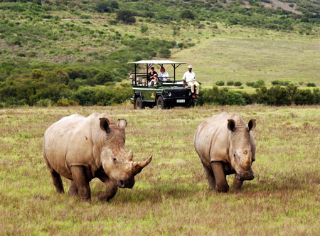 Amakhala-Volunteers-presented-by-Safari-Lodge_1.jpg