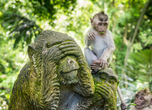 Monkey-in-sacred-monkey-for.jpg