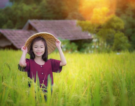 Cambodia rice farm
