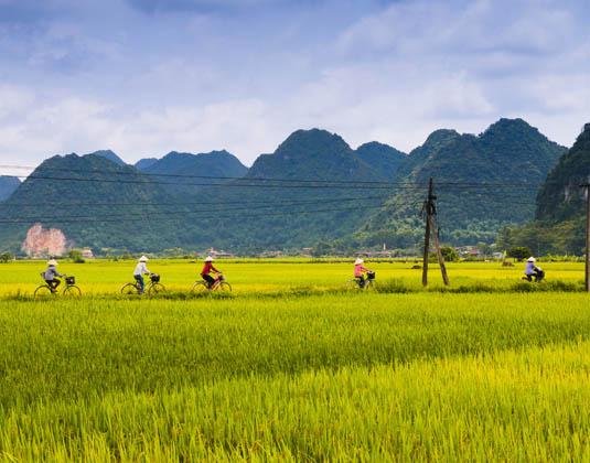 Vietnam cyclist rice field