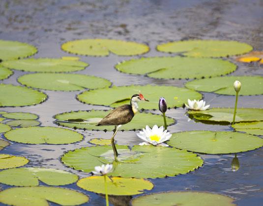 Kakadu_National_Park_river.jpg