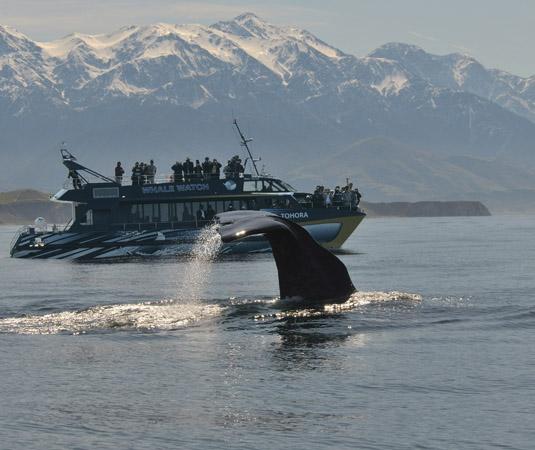 NELSON_ETC_Kaikoura_Whale_Watching.jpg
