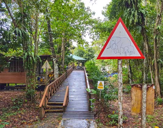 Borneo_Nature_Lodge_-_Pathway.jpg