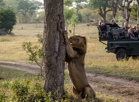 Ukumbe_Safari_Lodge_-_Game_Drive.jpg