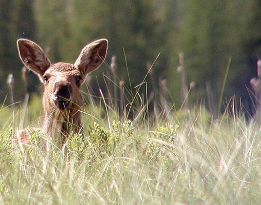 Algonquin_Provincial_Park_-_Wildlife.jpg
