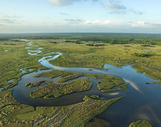 Aerial of the Everglades