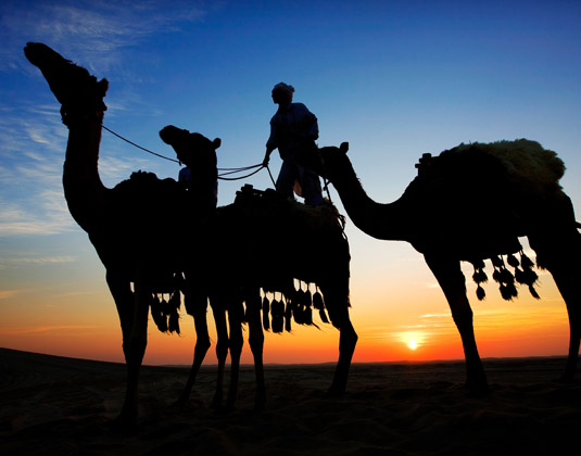 Qatar_Camels_at_Sunset.jpg