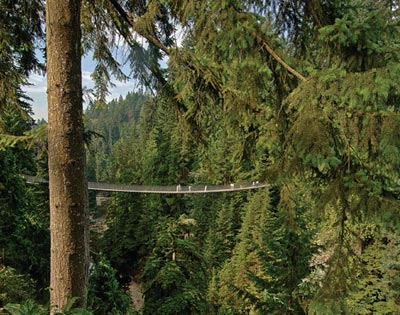 Vancouver City & Capilano Suspension Bridge excursion