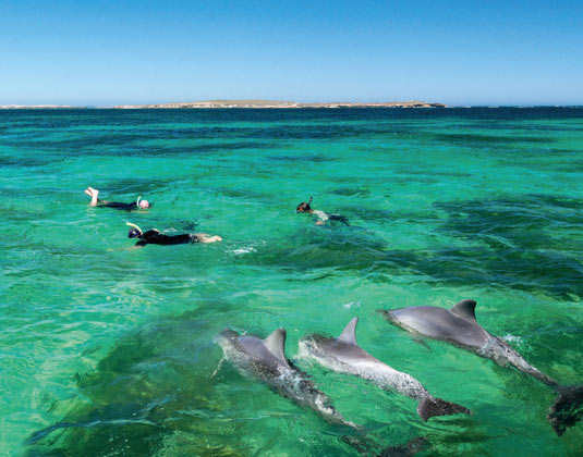 Swim-or-Cruise-with-Dolphin.jpg