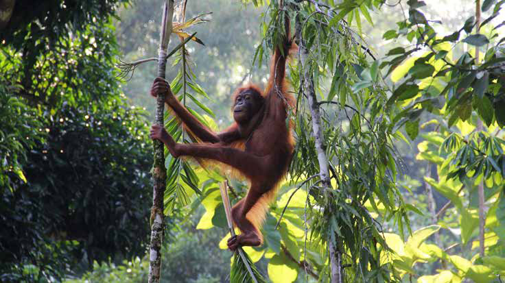 Borneo Adventure Holidays