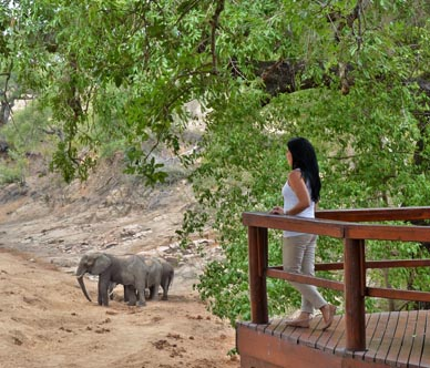 hamiltons_tented_camp_-viewing_elephants_from_deck.jpg
