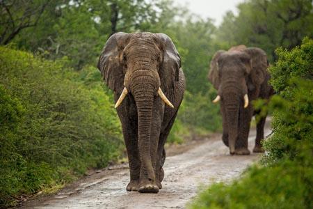 Rhino-Ridge-Safari-Lodge_elephants-1.jpg