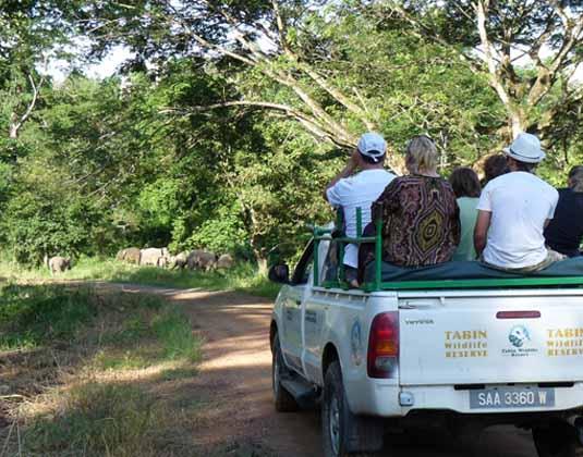 Tabin Wildlife Reserve dusk drive