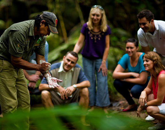 Daintree Walkabout excursion