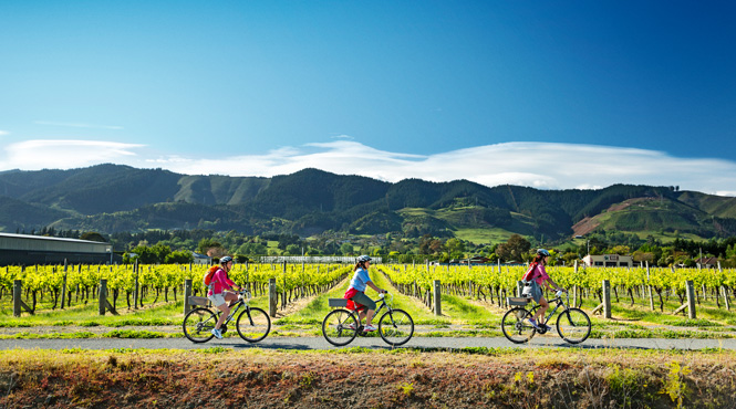 Cycling the vineyards