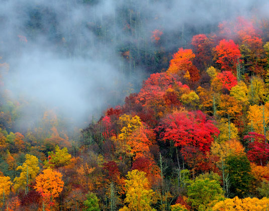 _Great_Smoky_Mountains_Great_Smoky_Mountains.jpg