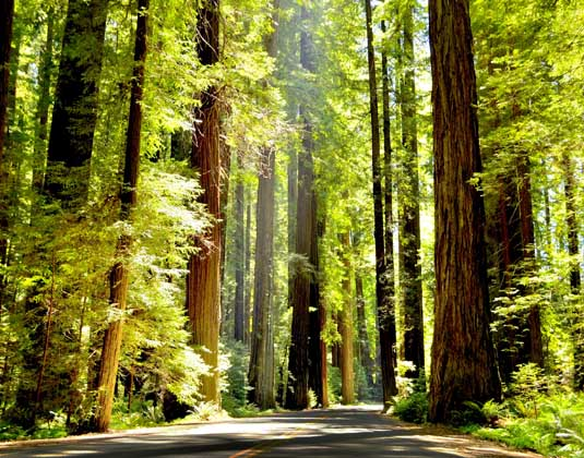 Redwood_National_Park.jpg