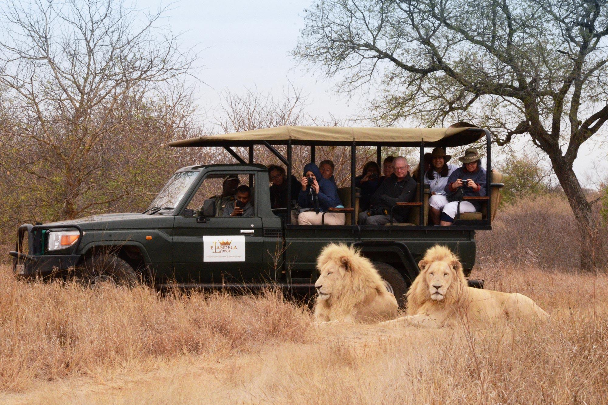 South Africa Safari Holidays
