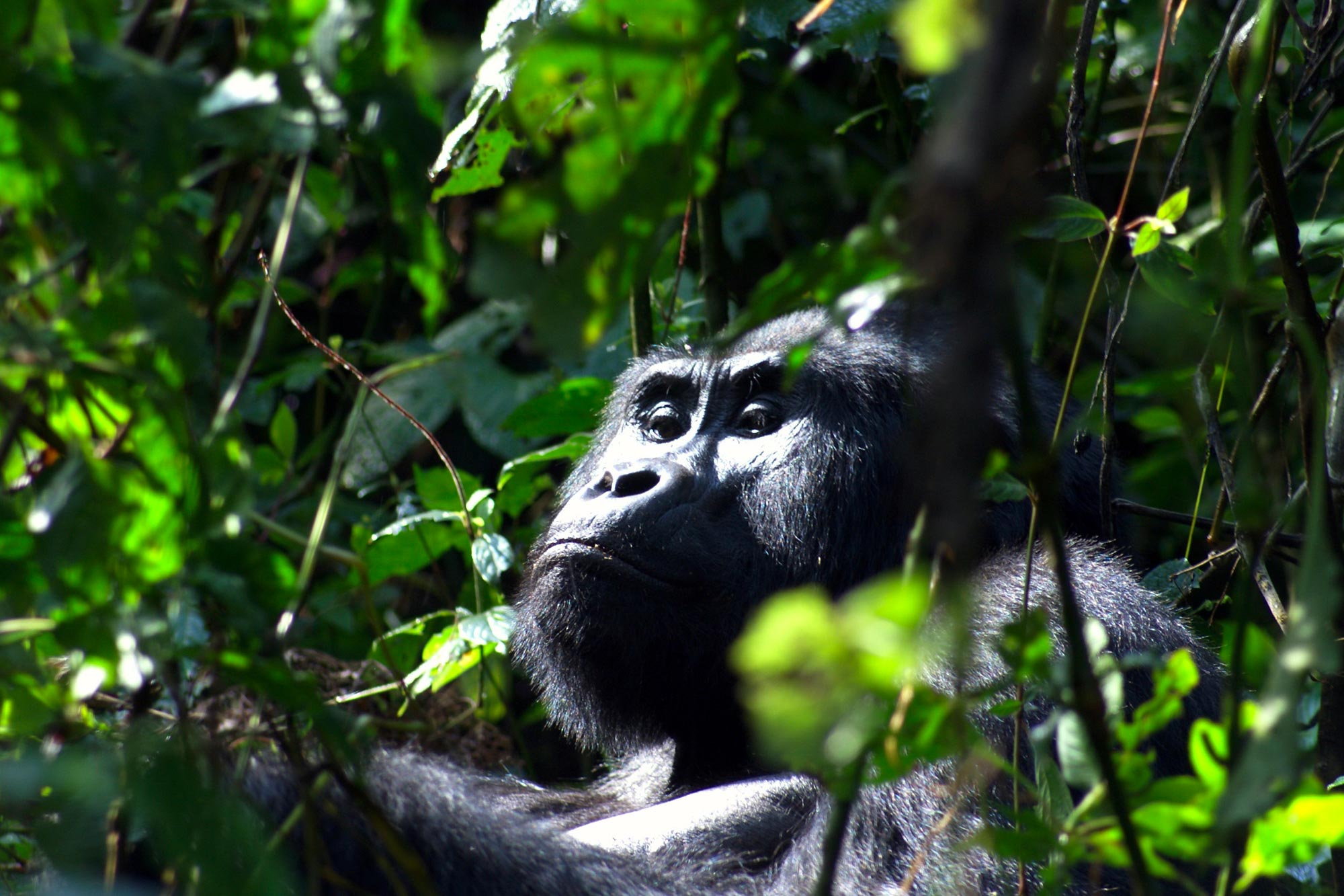 Cape Town & Gorillas in Uganda Holidays