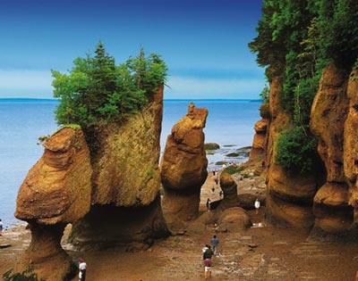 Hopewell Rocks Admission & Guided Visit excursion