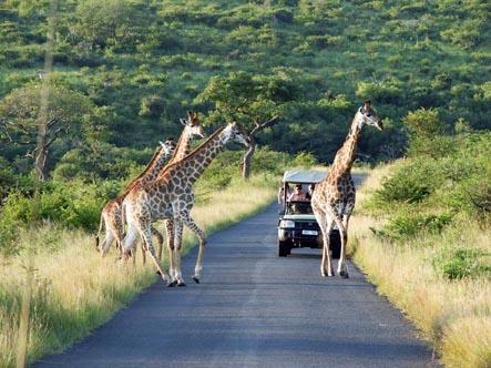 Rhino-Ridge-Safari-Lodge_game_drives.jpg