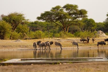 The-Hide_Hwange-Natl-Park_wildlife.jpg