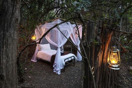 Bellevue-Forest-Reserve-StargazerCamp_sleeping-area.jpg