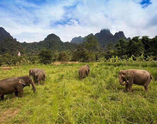 Elephant_Hills_-_Ethical_Elephant_Experience.jpg