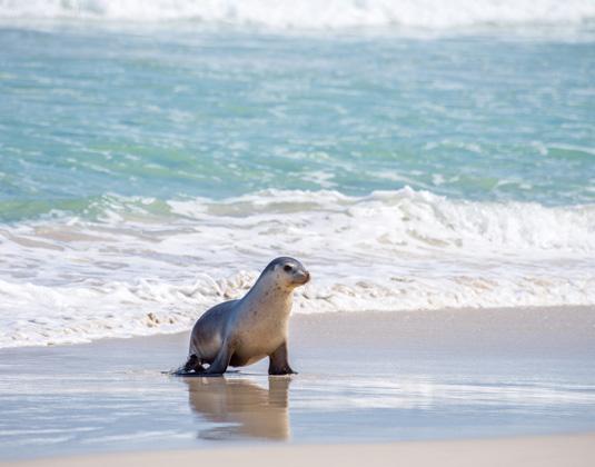 Seal_Bay_Conservation_Park,_Kangaroo_Island.jpg
