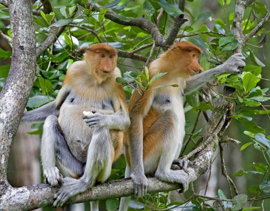 Langkawi Mangrove Wildlife