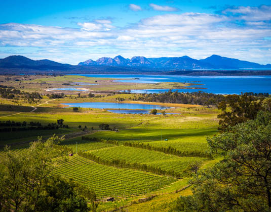 Freycinet_SIDE_Freycinet_vineyards_Tasmania.jpg