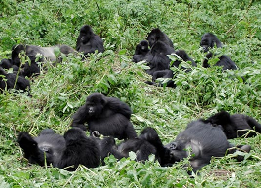 Cape Town, Kruger & Gorillas in Uganda Holidays