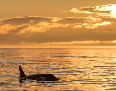 Sunset Whale & Wildlife Watching excursion