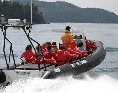 Marine Wildlife & Whale Watching excursion
