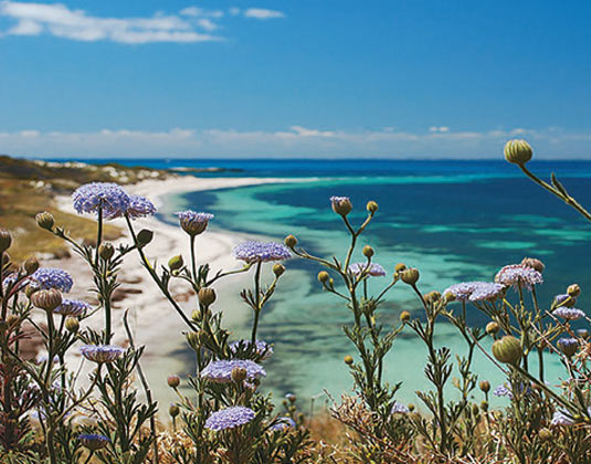 Discover Rottnest Island excursion