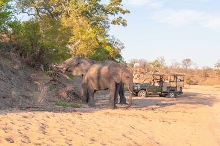 Jock-Safari-Lodge_elephants-on-safari.jpg