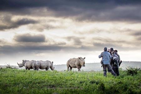 Rhino-Ridge-Safari-Lodge_rhino.jpg