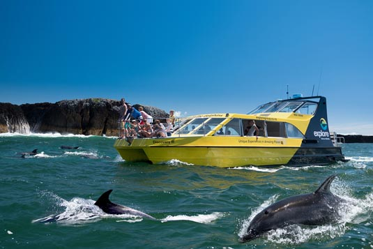 Dolphin Nature Cruise excursion