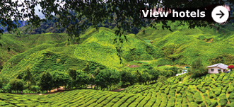 Browse hotels in Cameron Highlands