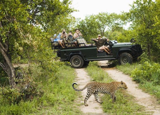 Kruger_leopard_shutterstock_145434481.jpg